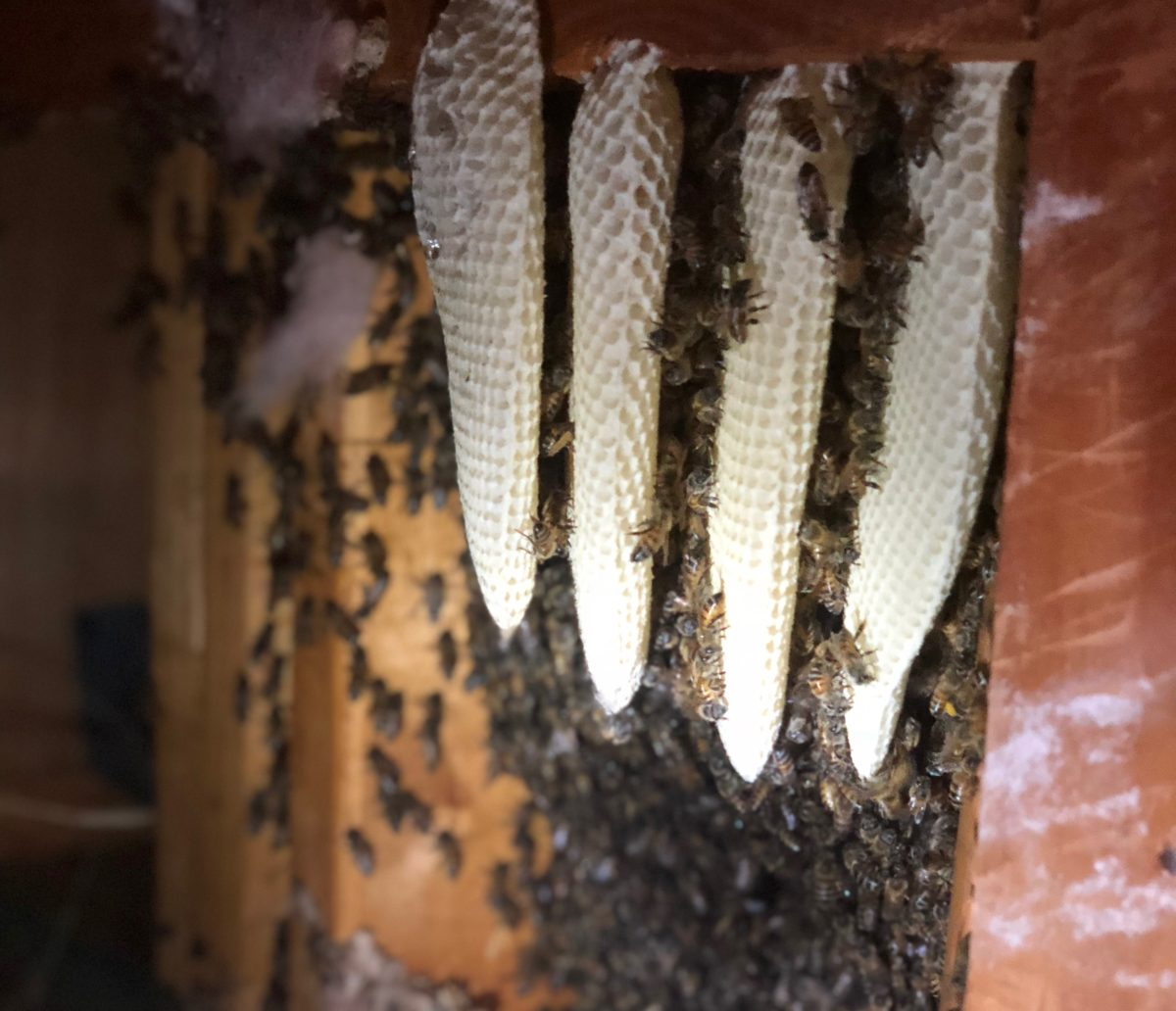 Bee Relocation