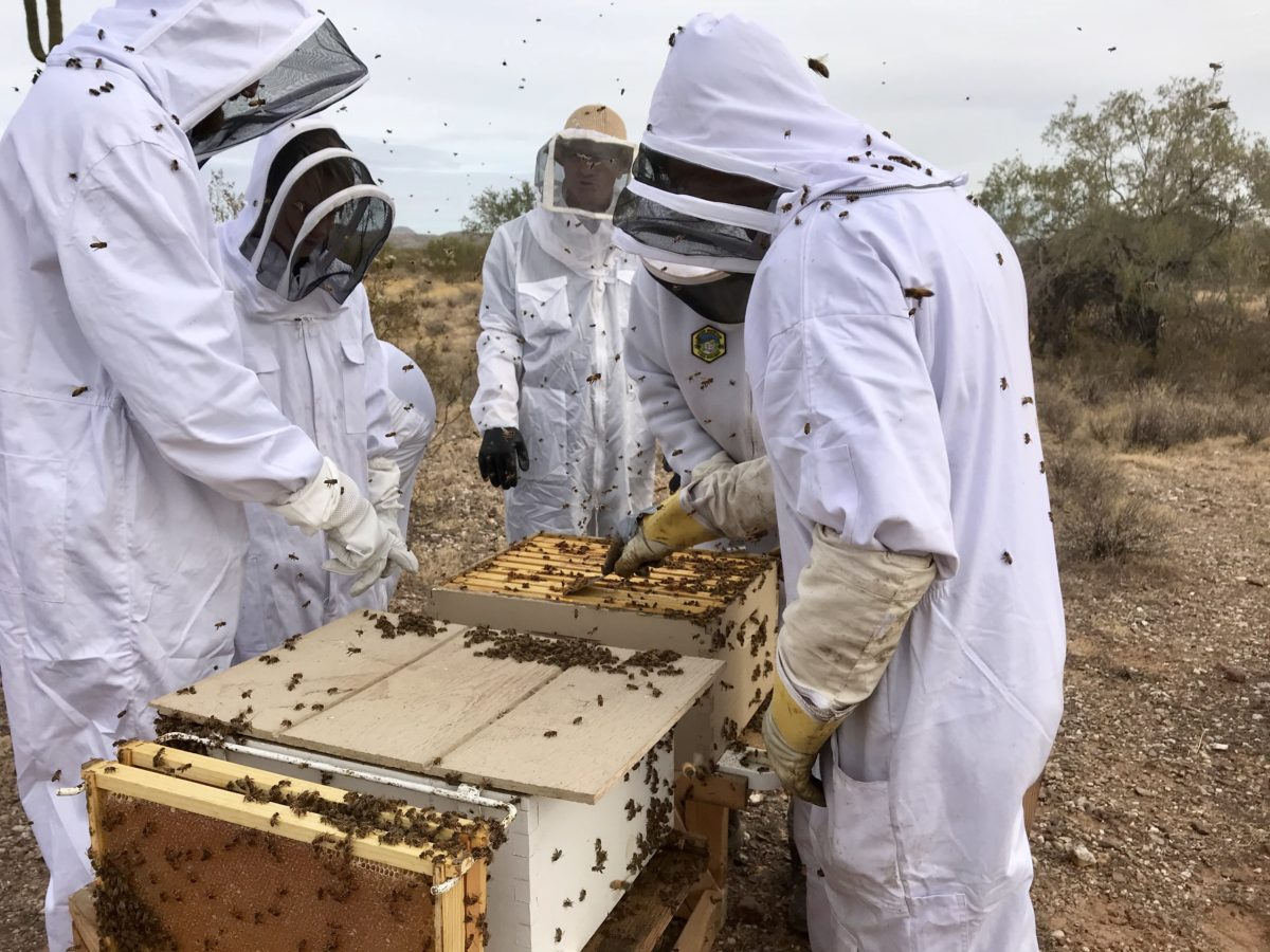 Arizona Backyard Beekeepers